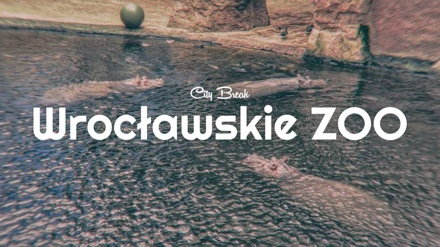 City Break: Wrocławskie ZOO